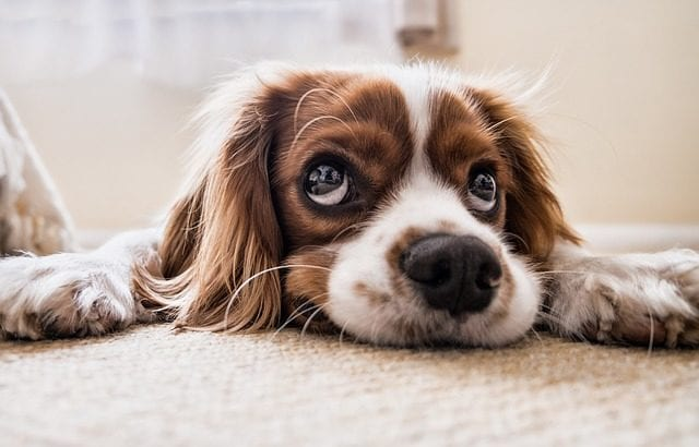 check out some tips about moving home with a pet...